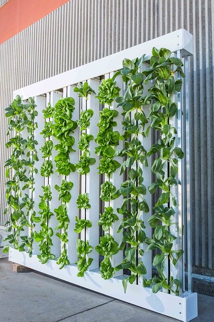 Pixabay Vertical Farm Green Wall Bok Choy